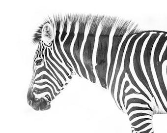 Zebra print room decor, zebra photography, black and white African animal wall art for home, kids bedroom, children nursery, boys or girls