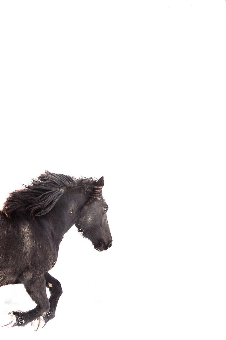 Horse Photography Black Mare Running On White Snowy Etsy