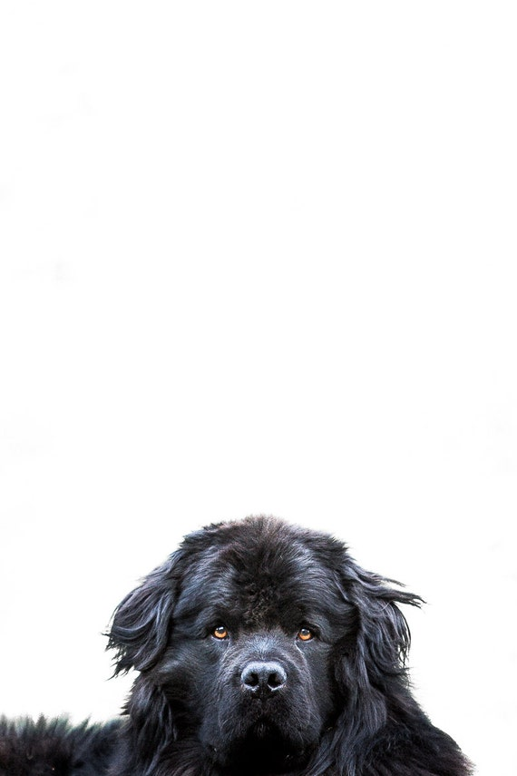 clinica della perdita di peso in corona cane