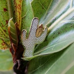 Cactus Lady Cloisonne Enamel Pin