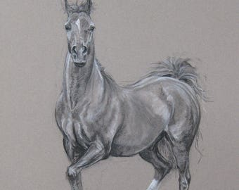 Original horse art equine art energy and movement equine horse charcoal and chalk movement art drawing 'Look at me!' by H Irvine