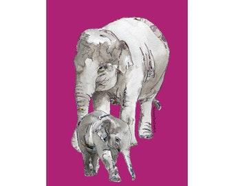 Elephants - Chester Zoo