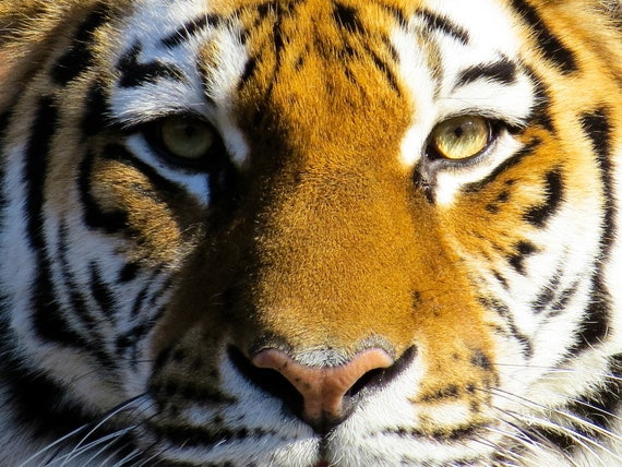 NEW CROSS STITCH EYE OF THE TIGER 2 CHARTS