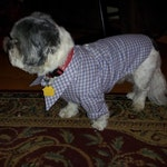 Custom Handmade Doggie Dress Shirt w/Pocket on custom printed fabric