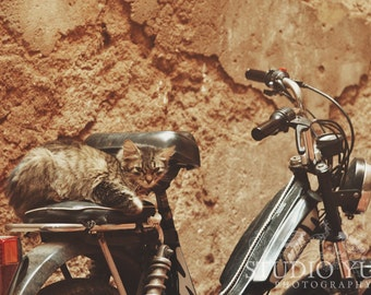 Cat Photo, Biker Kitty, Stray Cat, Moped, Bike, Fine Art Travel Photography, Fun, Whimsical Art, Animal Wall Art - Attitude