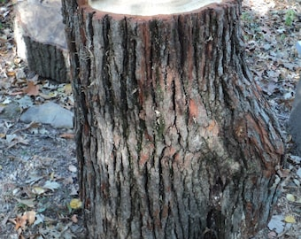 Live Edge Oak Tree Logs which can be recycled into so many things and are from a 200 year old Oak Tree