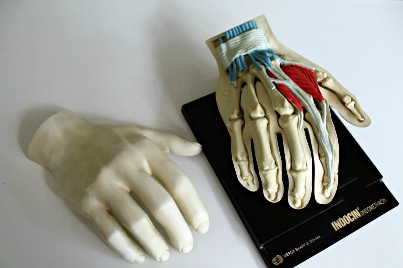 Vintage Medical Human Hand Anatomy Model Merck Sharp And Etsy