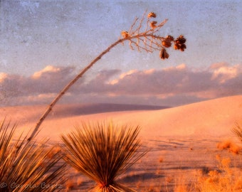 Yucca at Sunset Photograph - Atmospheric Photo of Desert Plant in White Sands National Monument - Fine Art Photography - 8 x 10 Photo Print