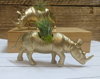 Gold Rhinoceros Planter with Live Air Plant for Indoor Gardening