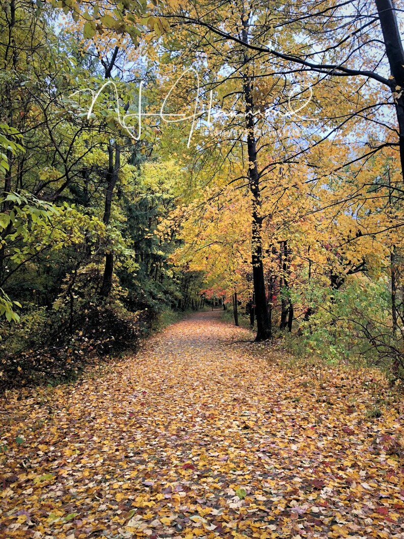 Fall background digital  country woodsy path digital image 0