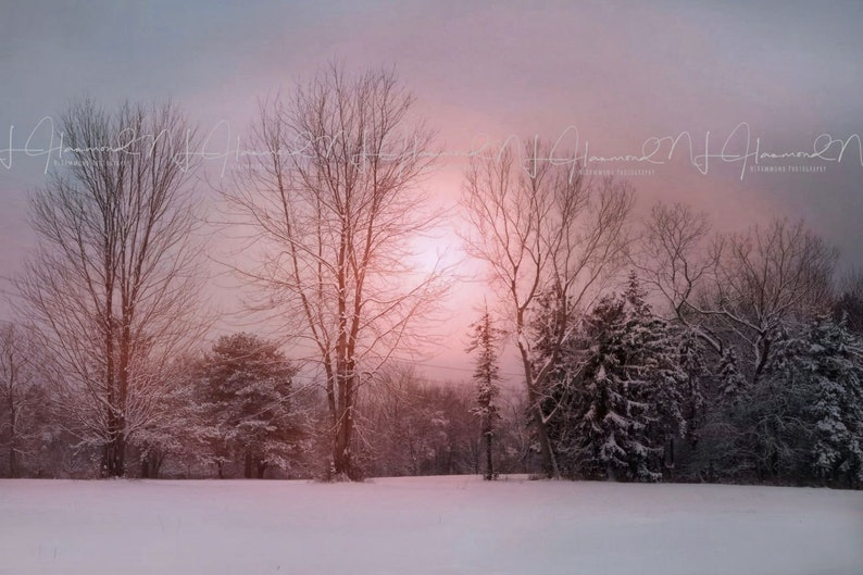 Winter Digital backdrop with snow and trees Christmas digital image 0