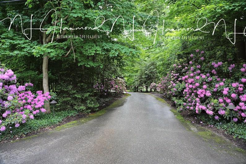 Summer Flower Path Digital Background Wedding background image 0