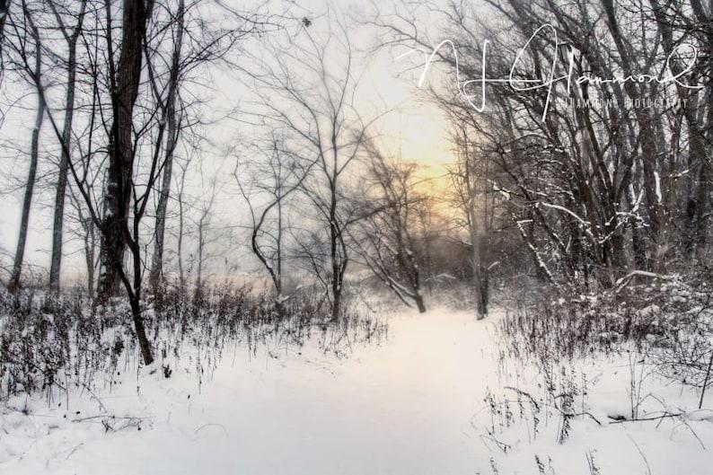 Winter Digital background Christmas backdrops snowy backdrop image 0