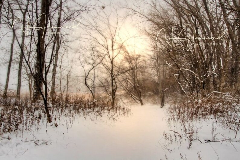 Winter Digital background with path Christmas backdrop image 0
