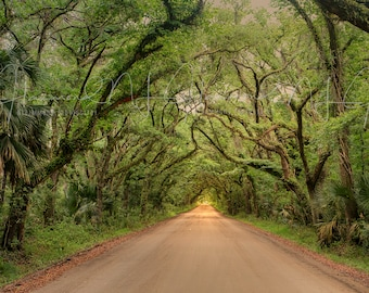 Summer Digital Background with Path and Trees Background with road Avenue of Oaks Print Edisto island South Carolina