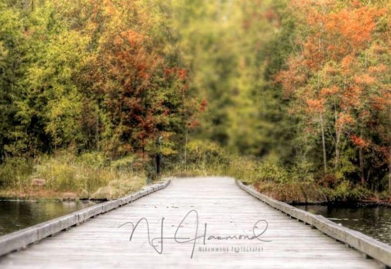 Fall background digital fall digital backdrop path woodsy image 0