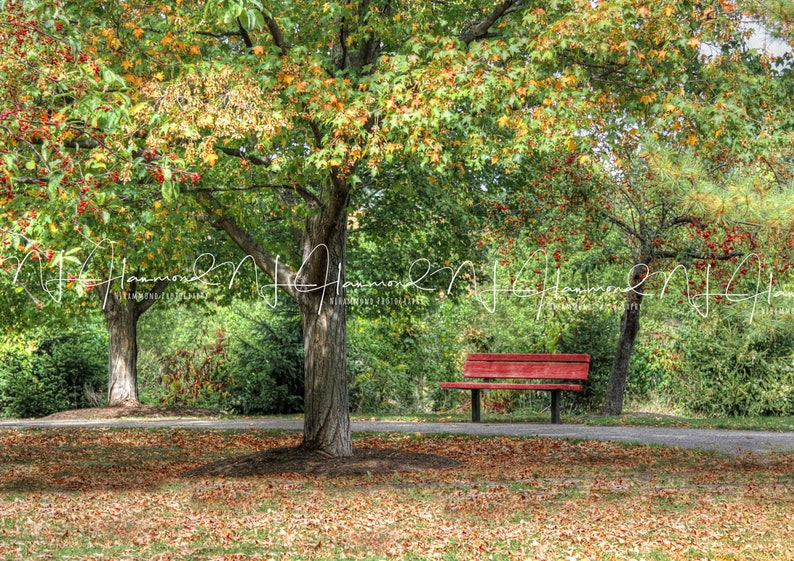 fall digital backdrop photoshop digital backgrounds instant image 0