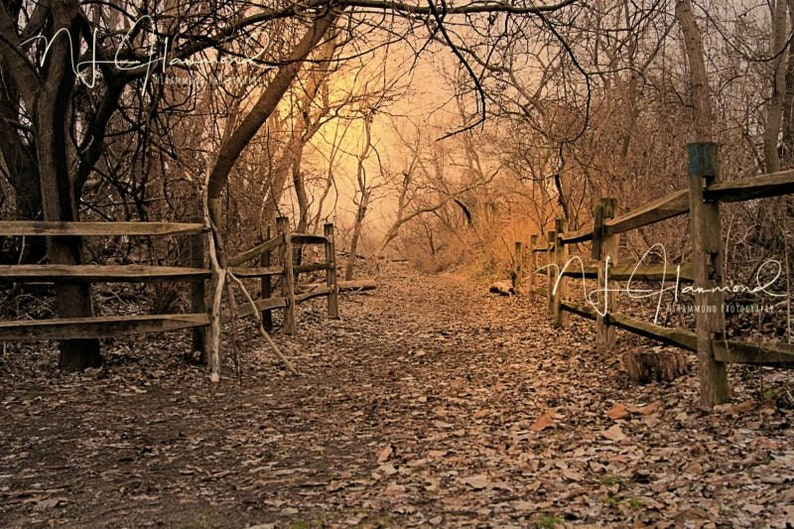 Fall background digital with path Fall background Path image 0