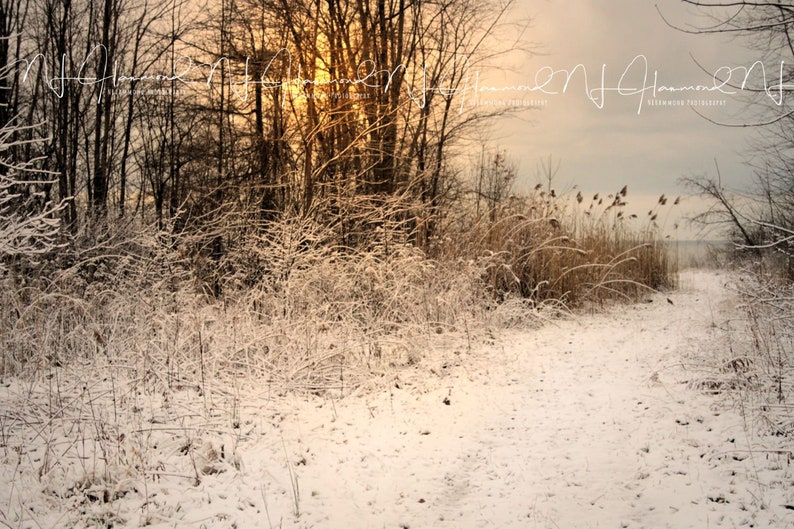 Winter background Digital or Print Christmas Background snowy image 0