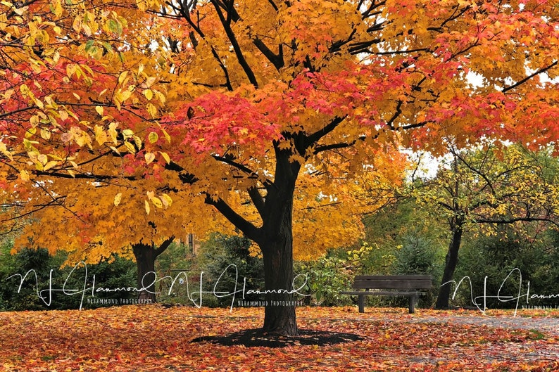Fall digital background with colorful leaves fall backdrop image 0