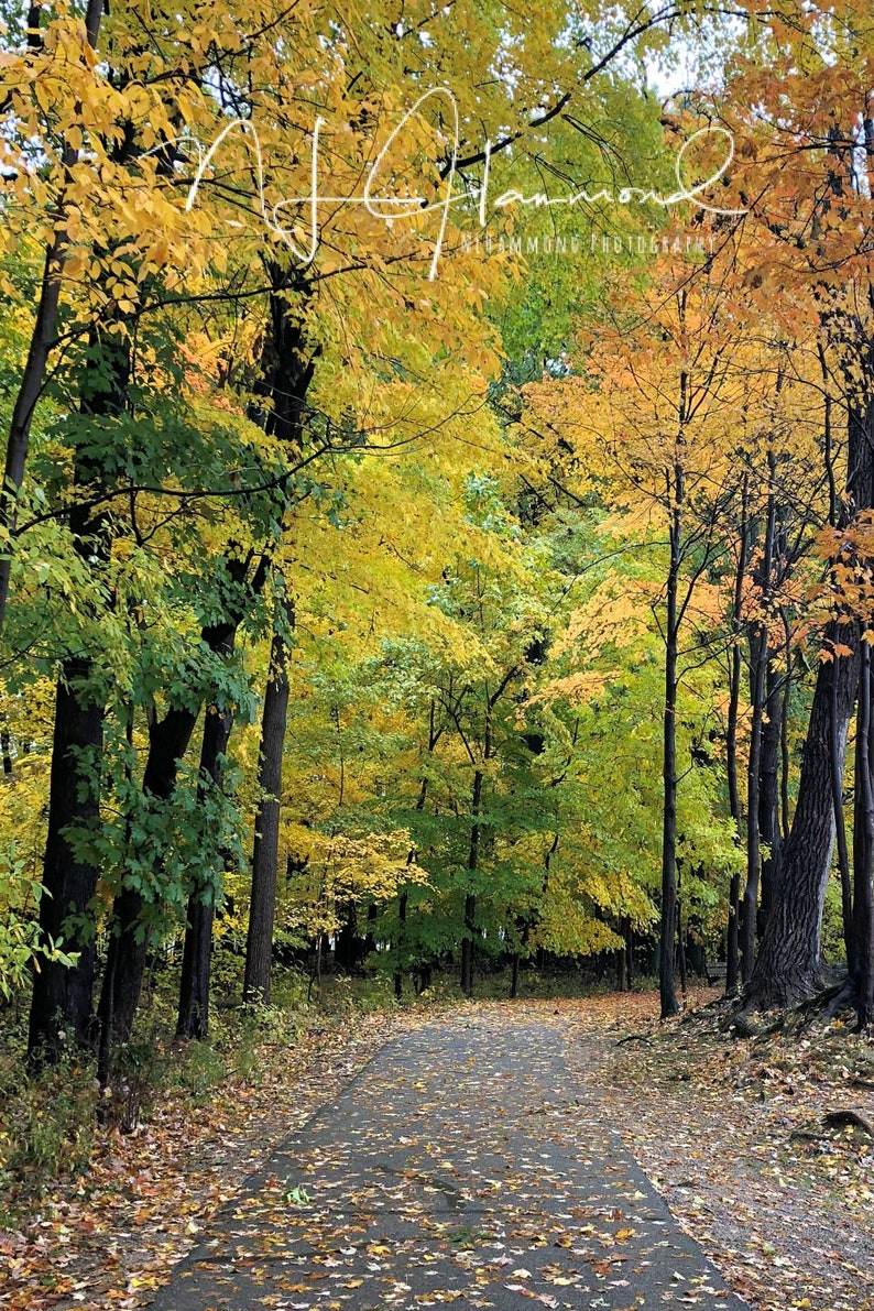 Fall Digital Background with Path Vertical Portrait image 0