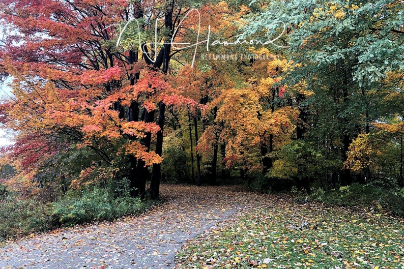 Fall digital background with path fall trees backdrop path image 0