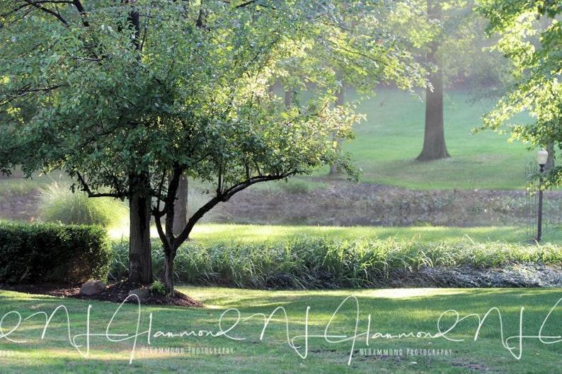Set of 2 Tree digital backgrounds Park digital background image 0