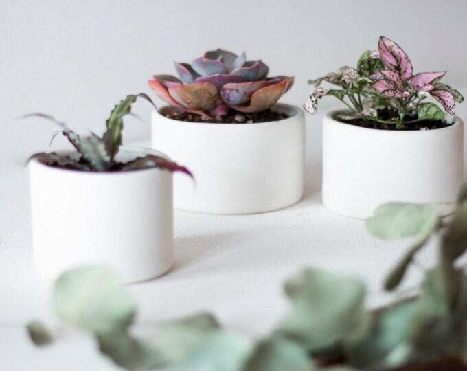 Small White Ceramic Cylinder Planters, White Ceramic Planter, Succulent, Cactus, Mini Planter