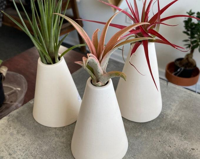 Handmade Porcelain Habitat and Air Plant