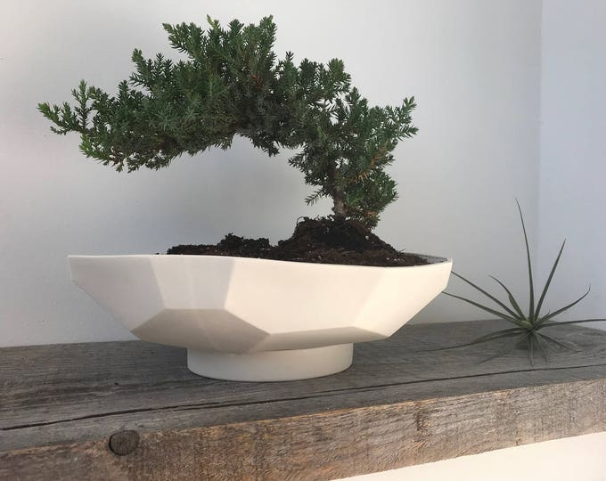 Geo Prism Bonsai Planter, Large shallow white ceramic planter