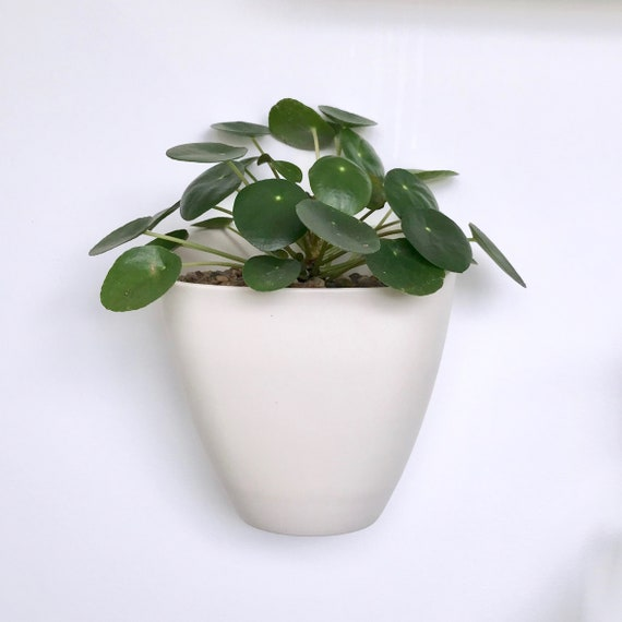 Sierra Porcelain Wall Planter Box