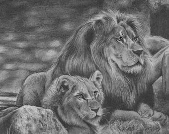 Lion Family original hand drawing artwork pencil drawing wildlife 11.7'' x 8.3''