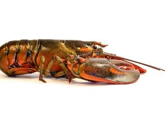 Lobster, horizontal