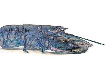 Blue Lobster, horizontal
