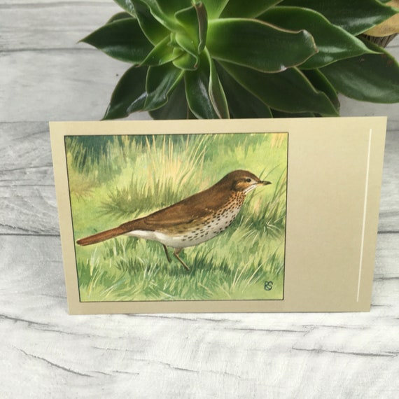 Song thrush bird print vintage postcard british bird native
