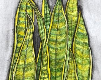Snake Plant - Original Watercolor Painting