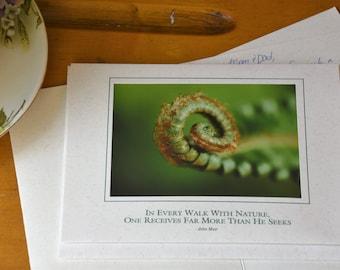 Fiddlehead Fern Photo Greeting Card