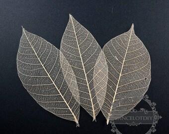 1pack 7-10cm tree leaf vein bookmark DIY material dry tree leaf 10pcs each pack 1503118