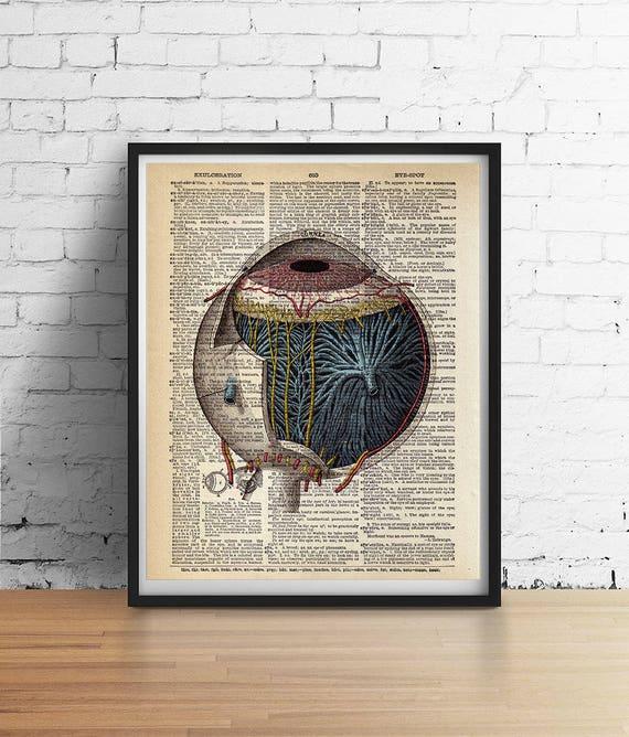 Antike Augapfel Auge Kunstdruck Auge Anatomie Poster   Etsy