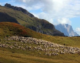 Italian Alps, Sheep Herd, Dolomites, Mountain Photography, Alpine Meadow, Giau Pass, Travel Photography
