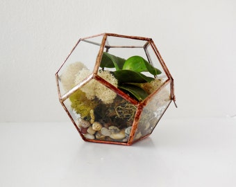 Geometric Glass Terrarium, Dodecahedron, Handmade Glass Terrarium, Stained Glass, Modern Terrarium  for Indoor Gardening