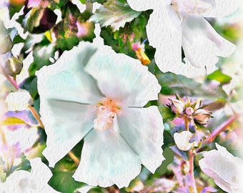 Beautiful Rose of Sharon Blooms Note Cards