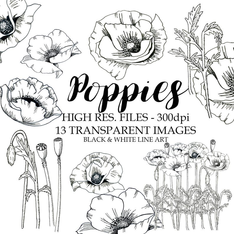 Dessin Au Trait Noir dessin au trait noir et blanc coquelicots clipart noir et | etsy
