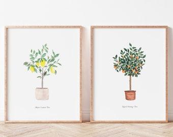 Set of 2 Navel Orange Tree and Meyer Lemon Tree Citrus Fine Art Prints - Artwork modern watercolor illustration fruit boho home decor