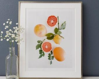 Oranges and Grapefruit Photography Photo Art Print Instant Download Printable - oranges lemons grapefruits playroom art modern boho bohemian