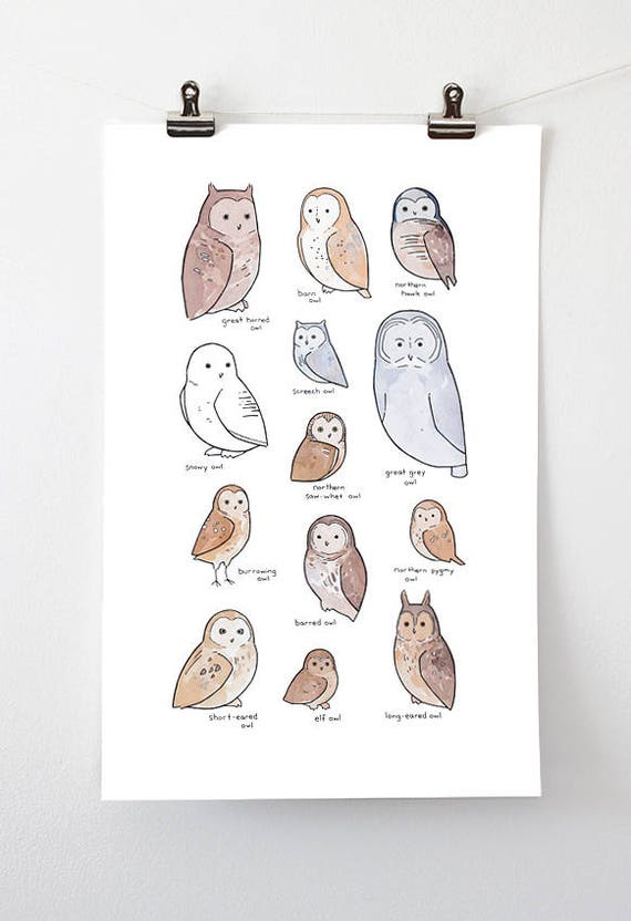 Illustrated Owl Species Chart - Whimsical Art Print