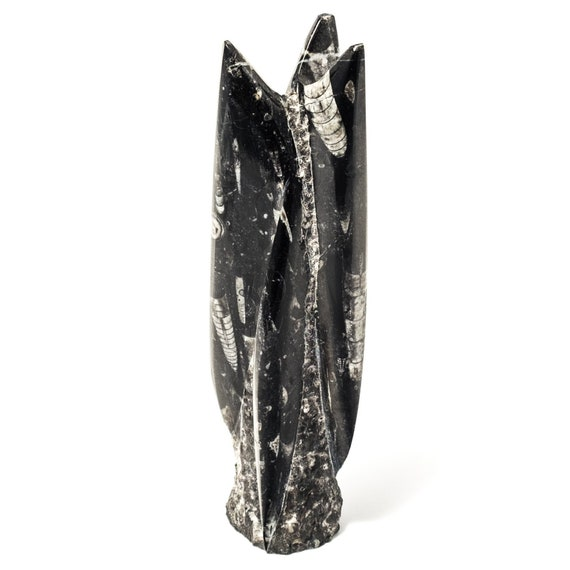 Orthoceras fossil squid sculpture, paperweight, desk accessory, home decor accessory, fossil