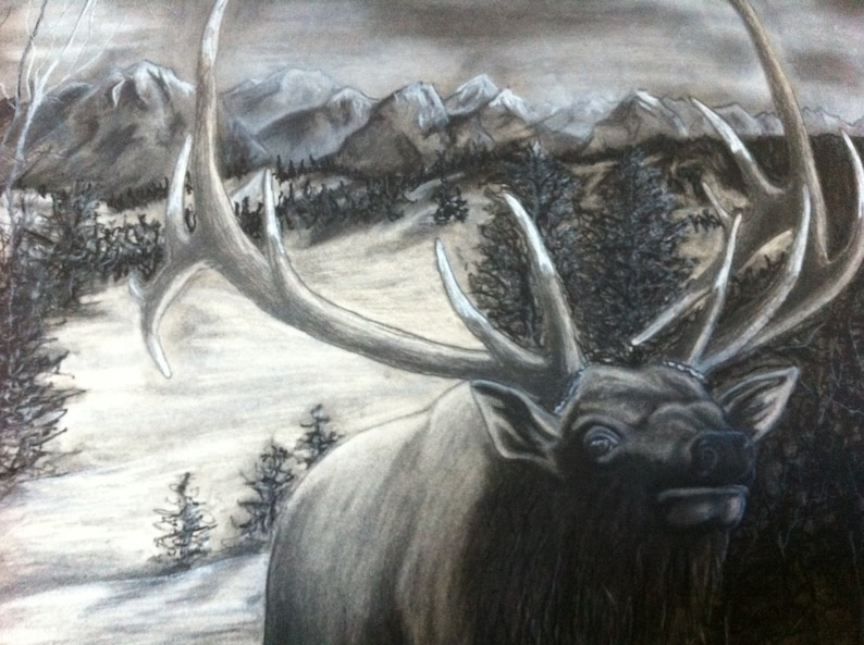 Bull Elk Bugle Call Charcoal Drawing By Montana Etsy