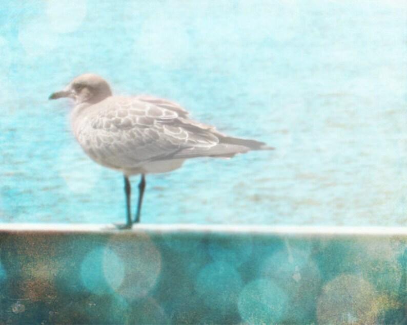 Seagull Beach Photo  Blue Aqua Bokeh Home Decor Wall Art Bird image 0