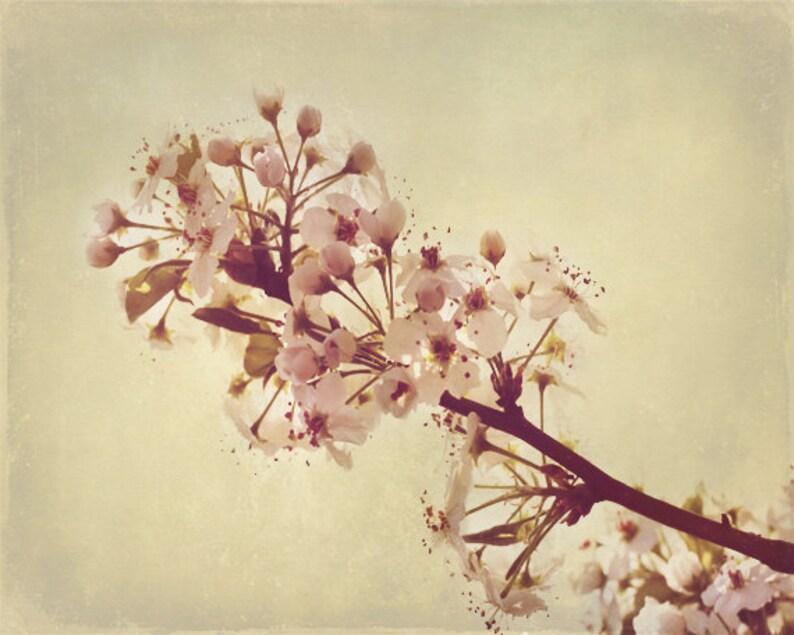 Cherry Blossom Spring Art Print  Pink Cream Beige Tan Soft image 0